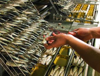 mise_en_boîte_sardines